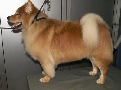 I am a Pomeranian mix!!!